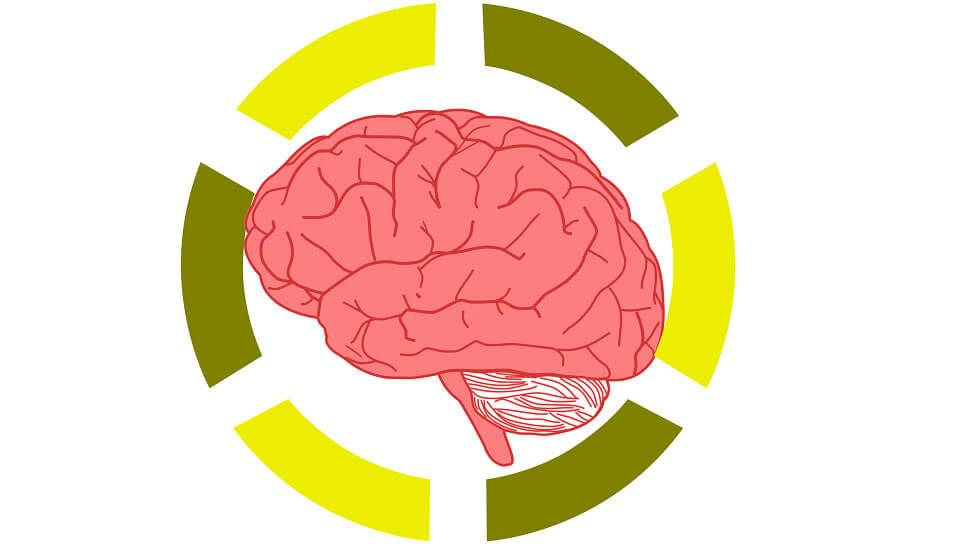 Why Educators Trained In Neuroscience >> Neuroscience Becoming A Hot Topic In The Education System
